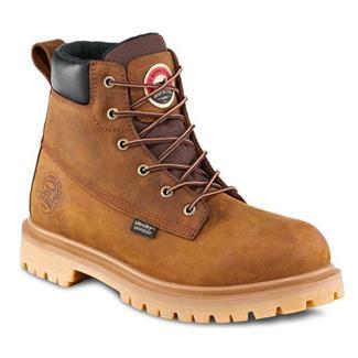 Irish Setter 83613 WP Brown