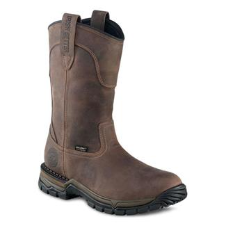 Irish Setter 83907 WP Brown