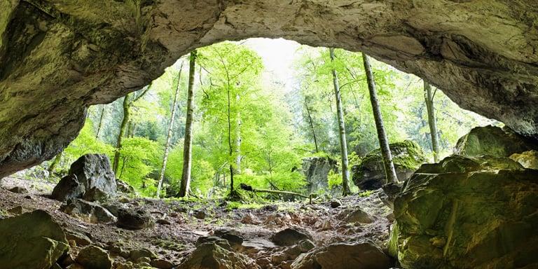 Move Into a Cave or Animal Den