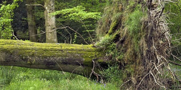 Sleep Under a Big Tree
